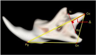 Effect of Strontium Ranelate on Condylar Growth during Mandibular Advancement in Rats